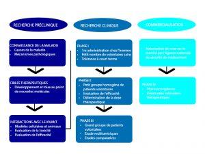 Les différentes phases d'un essai clinique